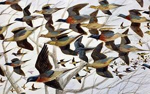 Ruthven Pigeons